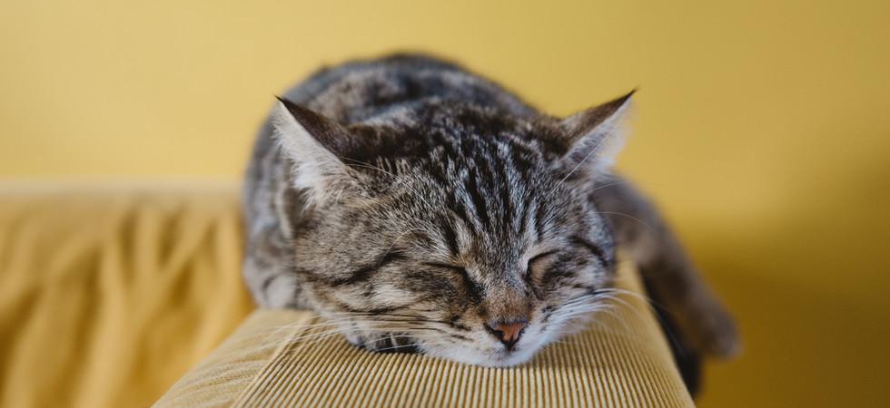 眠れる森の子猫