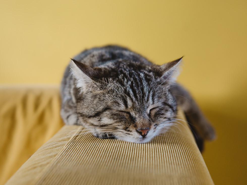 Gatito que duerme