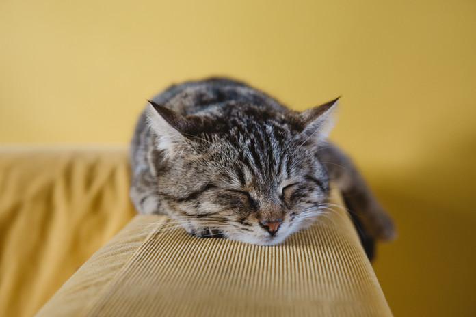 Katje van de slaap