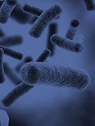 microbiology_journal.jpg