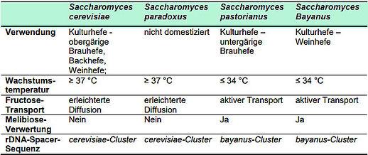 Saccharomyces Vergleich.jpg