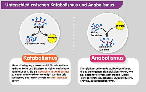 Anabolismus_Katabolismus.jpg
