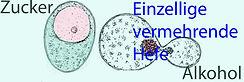 Hefeforschung_2.jpg