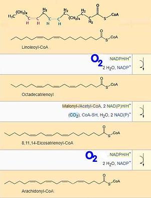 Synthese mit O2 def.jpg