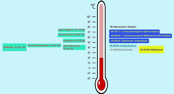 Temperaturbereiche_Enzyme 2.jpg