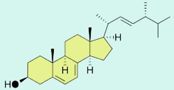 ergosterol_Struktur.png