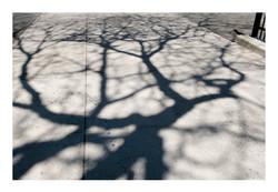 Shadows_047