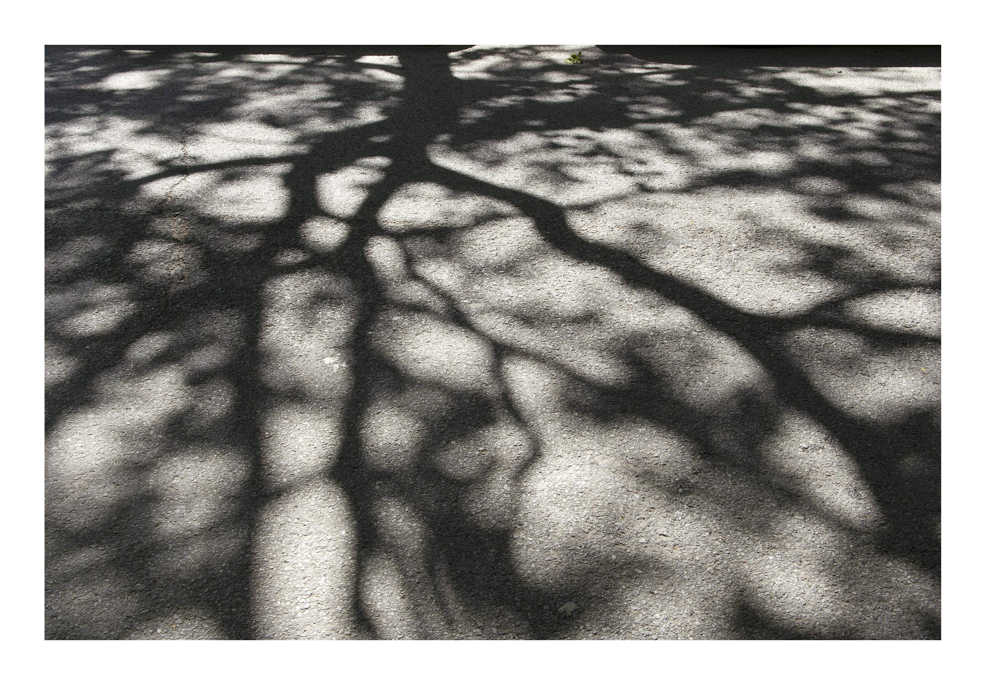 Shadows_386