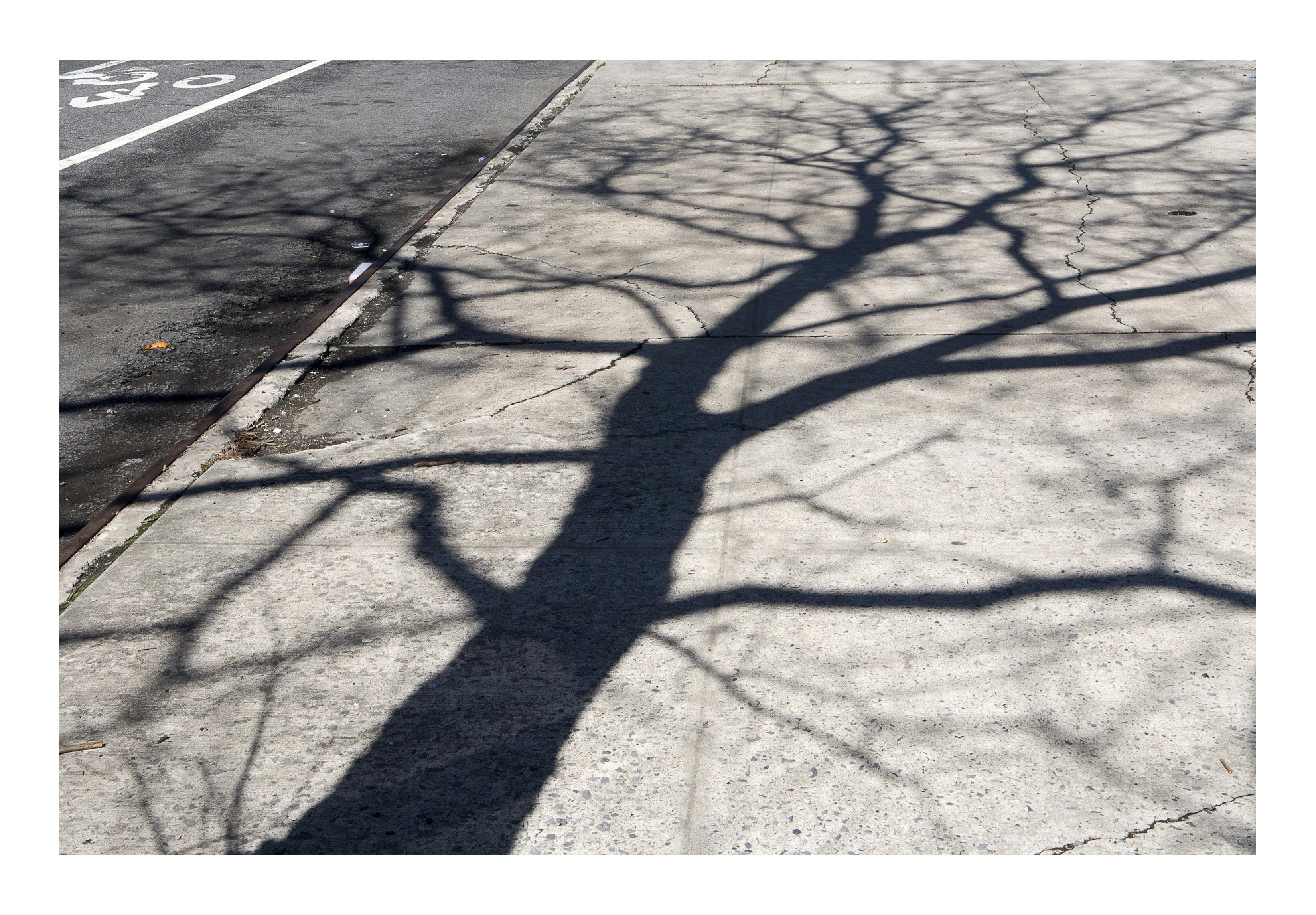Shadows_021