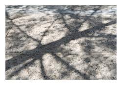 Shadows_196