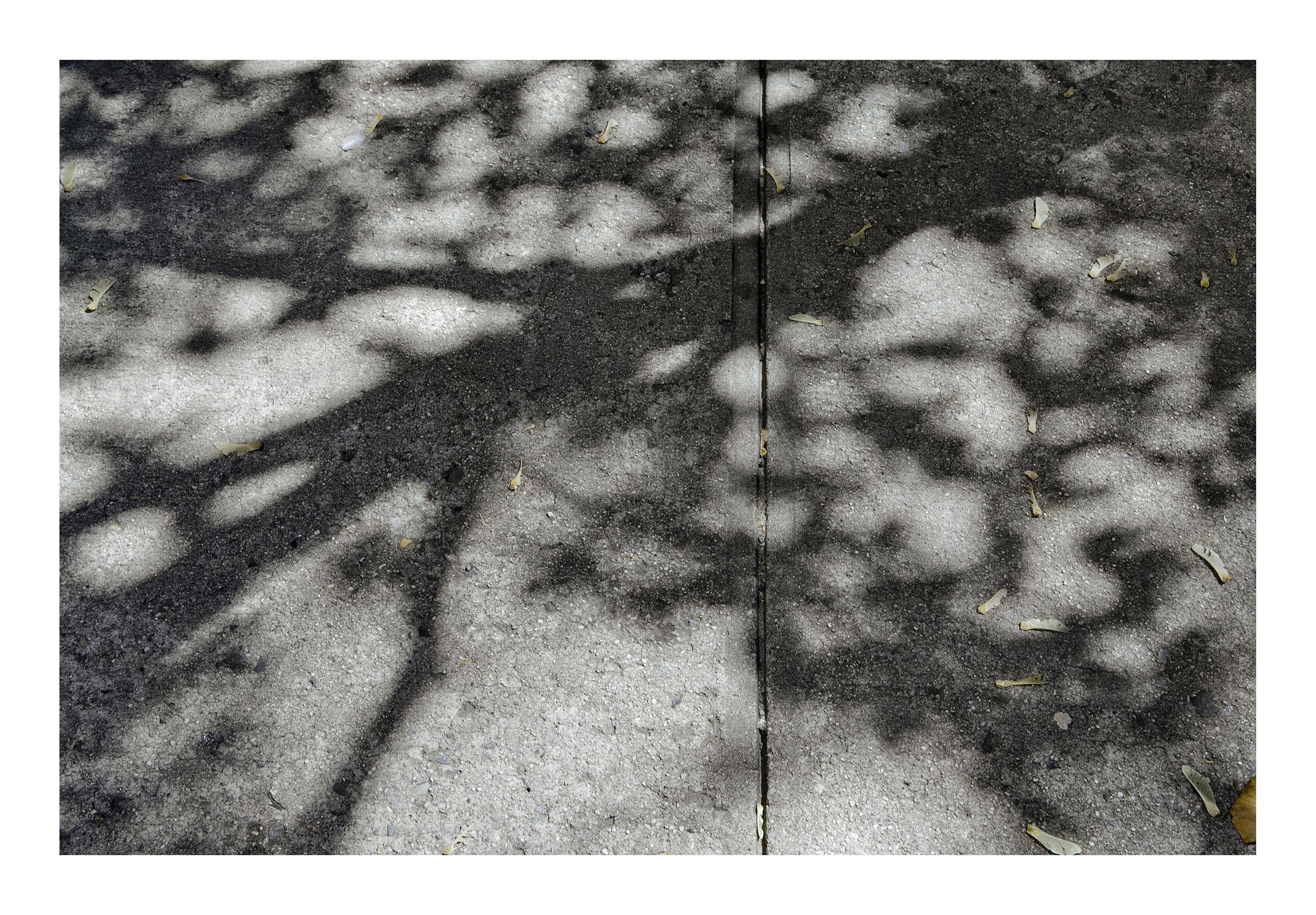Shadows_385