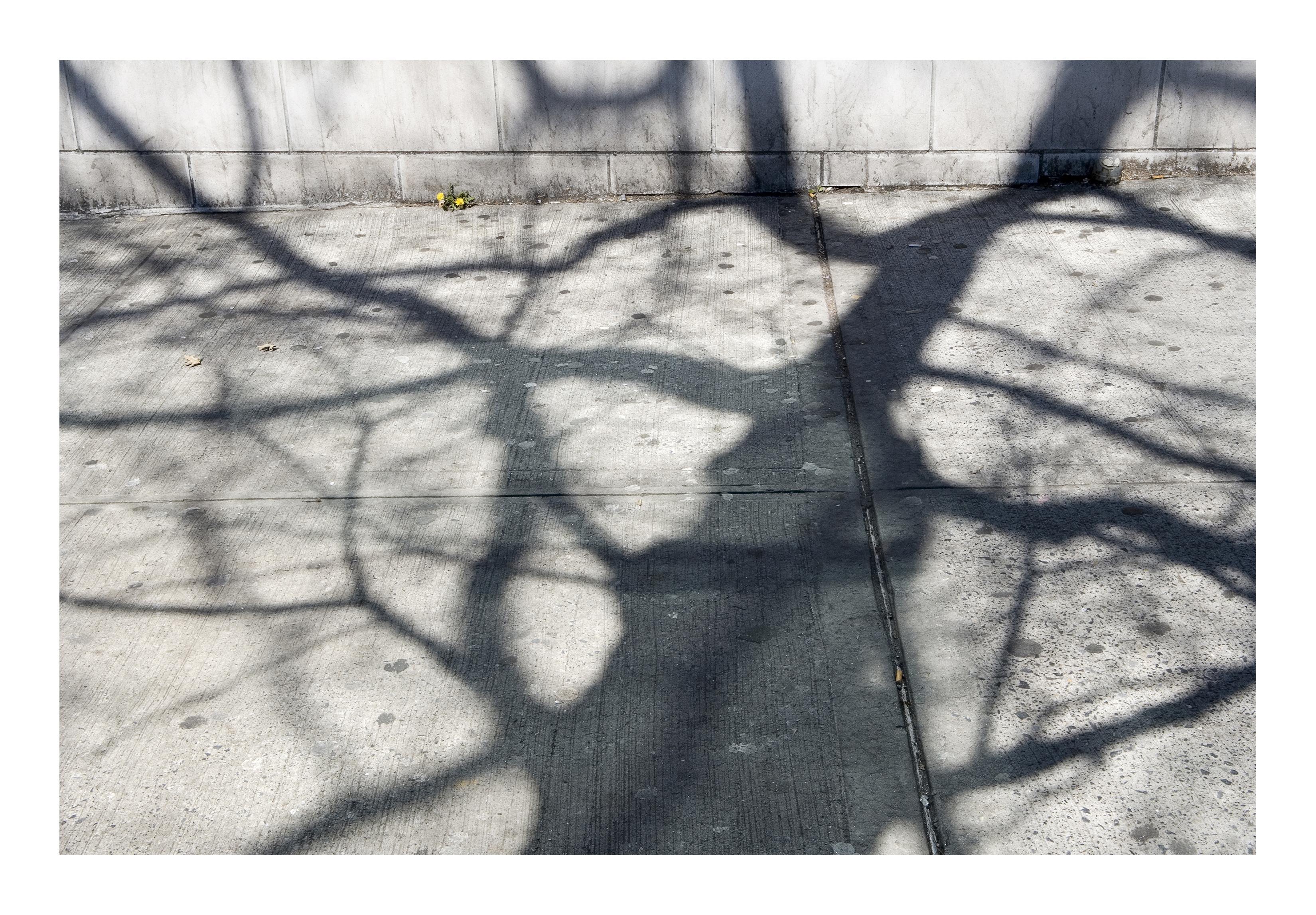 Shadows_037