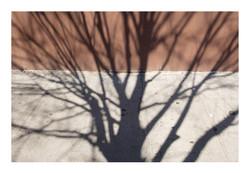 Shadows_275