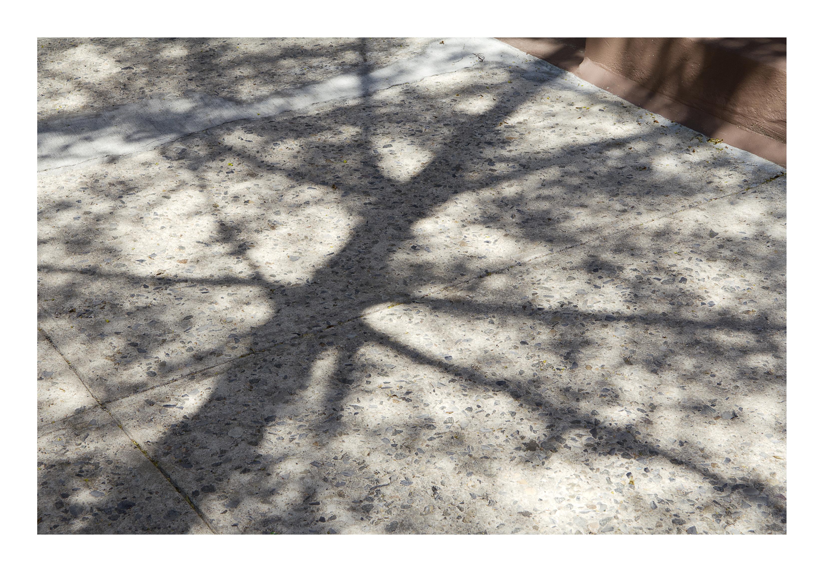 Shadows_193