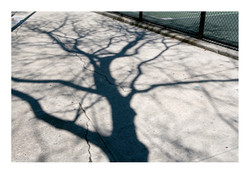 Shadows_019