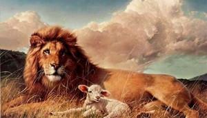 leone agnello