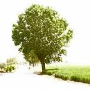 Un albero particolare