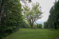 Front yard view