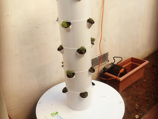 See how easily you can grow your own food