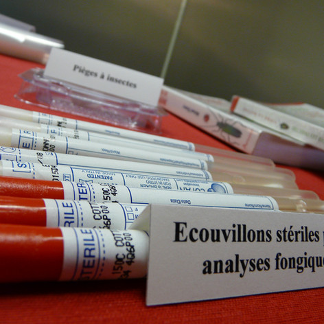 Analyses fongiques