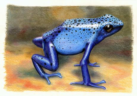 Голубая лягушка, 30х21, бумага, карандаш
