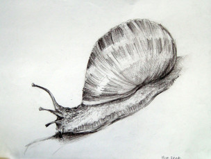 Корнева Юлия.Улитка 2. сепия, бумага. 42х30 gn031.JPG