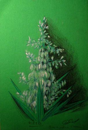 Корнева Юлия. Пальмовый цвет. цветные карандаши, бумага. 21х15 gn045.jpg