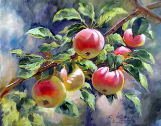 Яблоки на ветке.jpg