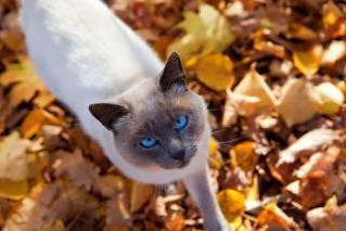 Feline Aging
