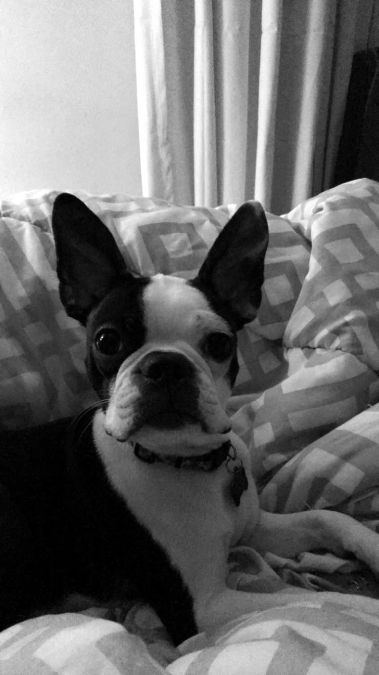 Bruno, our staff member Lindsey's dog.