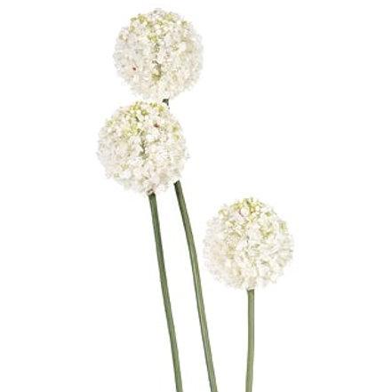 Allium white 5x5x84cm