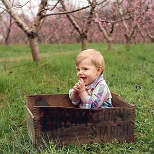 Ehmke Peach Blossoms