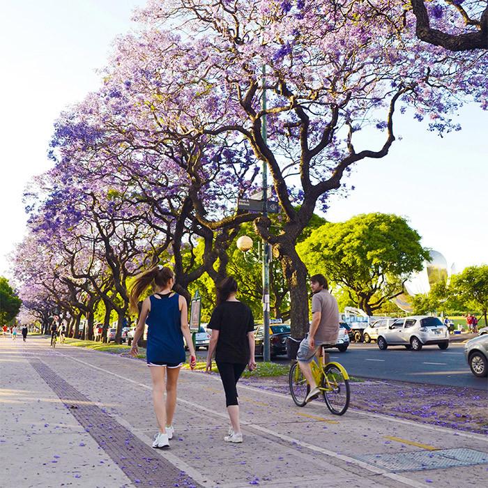 BuenosAires_LowCost_Gratis_bicis_bike_jacaranda_spring_primavera