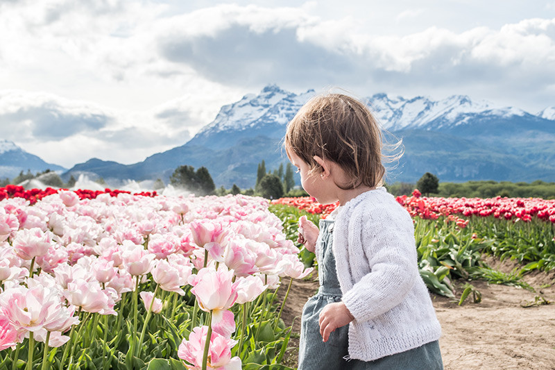 Trevelin_tulipanes_TEBA_NearBA_Argentina_Chubut
