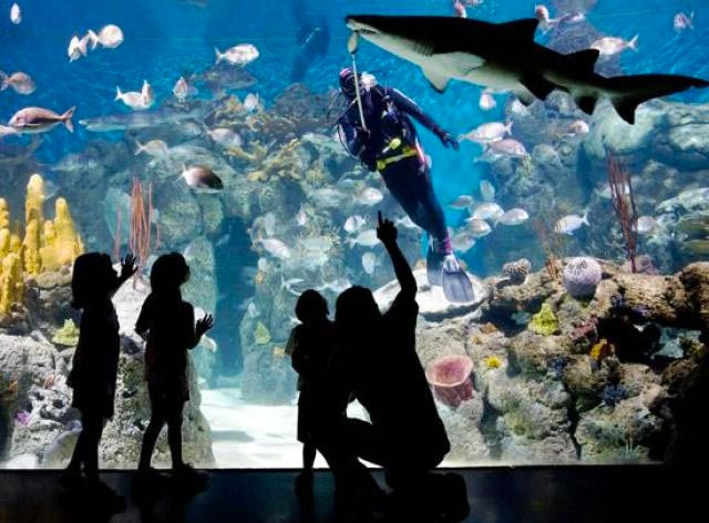 Turista_en_buenos_aires_Programas_con_niños_kids_temaiken_bioparque_animales_acuario