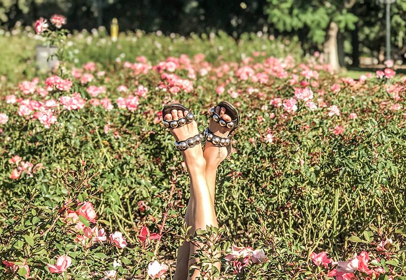 Parques_PArks_BA_BuenosAires_Turista_Turismo_Rosedal_Palermo_Camelia_Spring_Roses_Blossom