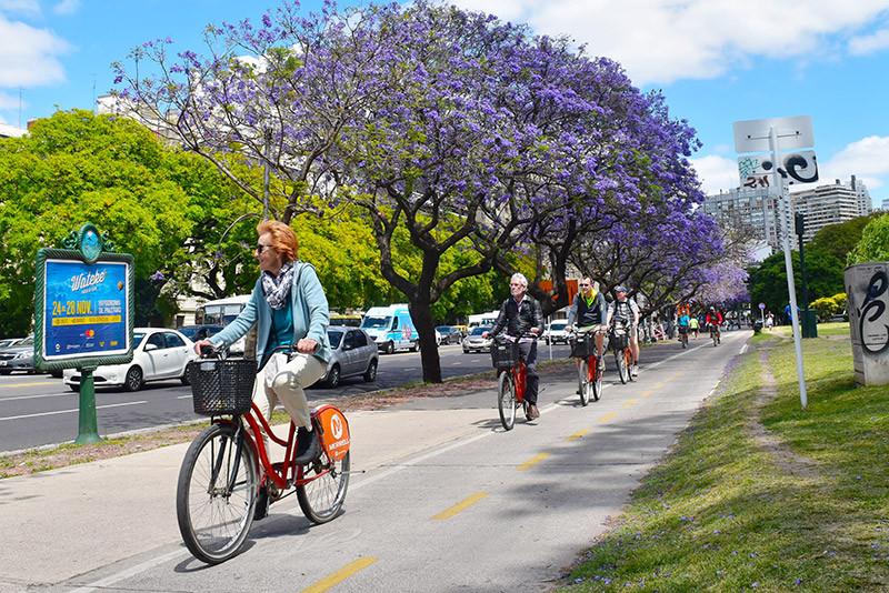 jacaranda_turista_en_buenos_aires_lila_violeta_Libertador