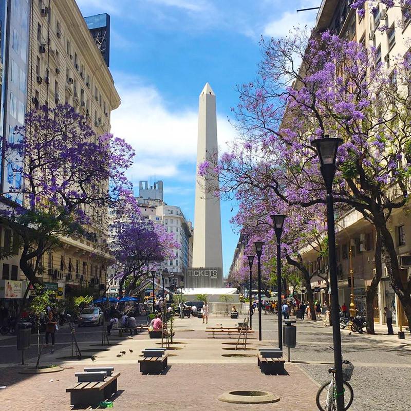 jacaranda_turista_en_buenos_aires_lila_violeta_sarmiento