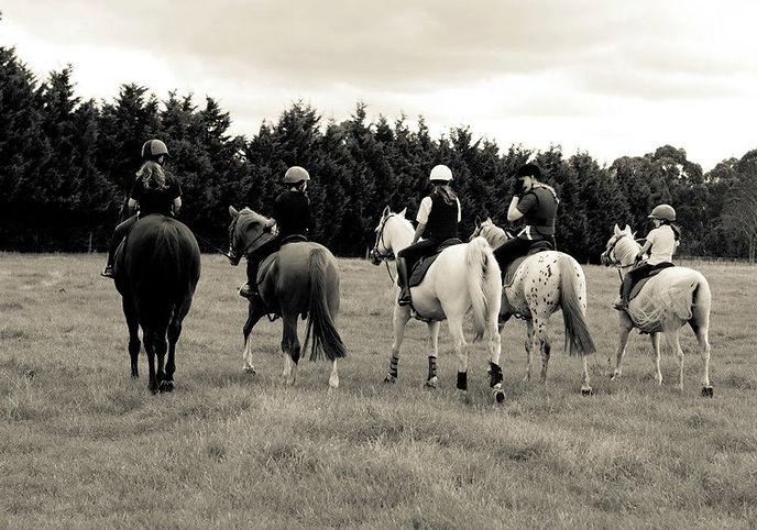 Horse Agistment Melbourne