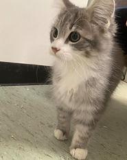oakley kitten.jpg