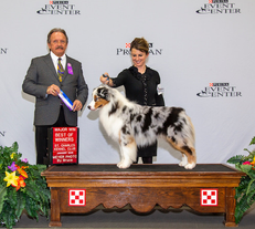 Yeager finishes his AKC Championship with a 5 pt major