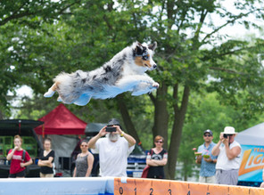 Ferris jumps to his Senior CWC dock title