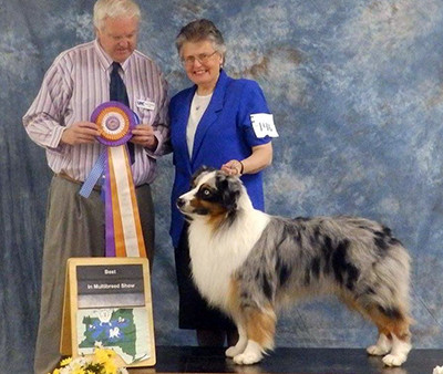 Griffy takes his 2nd UKC BIS