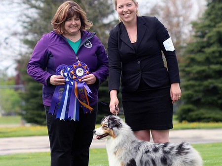 Tommi takes Best of Breed from the classes at her ASCA debut