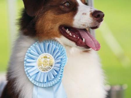 Best Puppy in Show for Dewey, Best Puppy in Group for Winnie