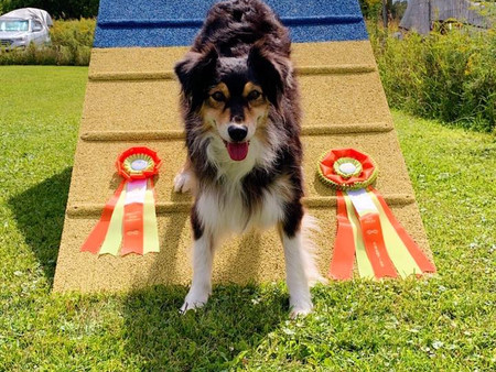 Karma earns her ATChC agility title