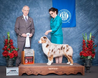 ASCA/CKC Ch Ninebark Oracle Get Rich Quick