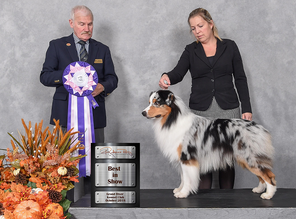 Ferris takes UKC Best in Show & Group 2