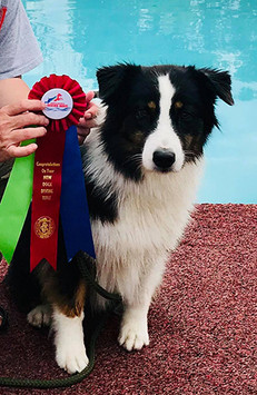 Philly earns her NADD/AKC/CKC Master Dock title