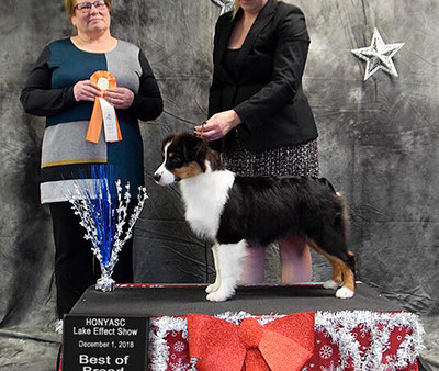 Puppies and Ferris get some ribbons